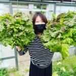 本日からグリーングリーンカレーです♪限定で野菜モリモリ〇