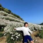 除虫菊は今が旬です◯しまなみ海道ドライブに♪♪